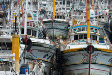 Crowded Fishing Harbour