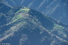 Terraces In Upper Zhuoshui Valley
