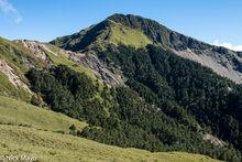 High Altitude Grassland & Forest