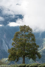 Tree In The High Mountains