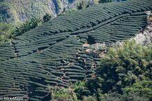 Tea Along The Ridge