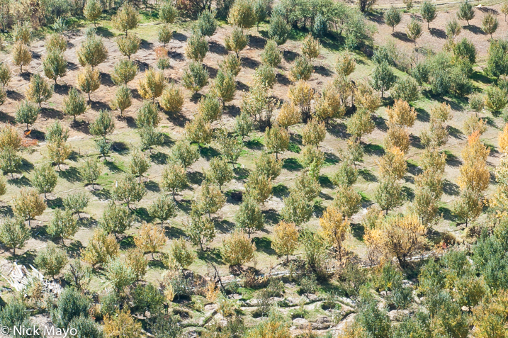 Himachal Pradesh,India,Orchard, photo