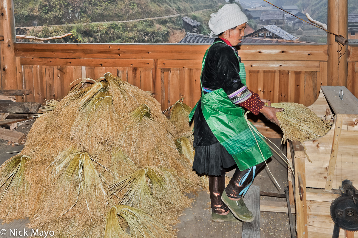 A Dong woman threshing paddy rice on a foot operated thresher in Yintan village.