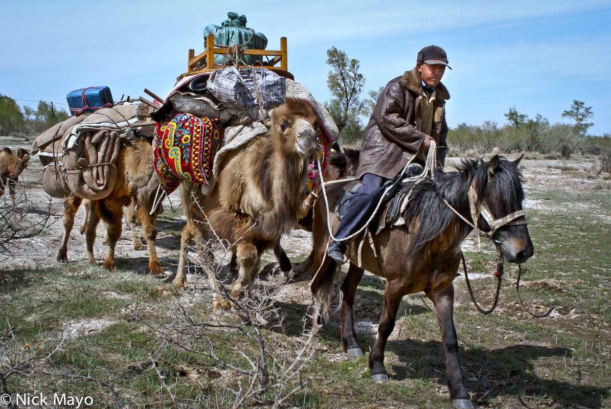 A Kazakh sheep herder moving by horse to a new camp near Burqin leading a camel train carrying his belongings.