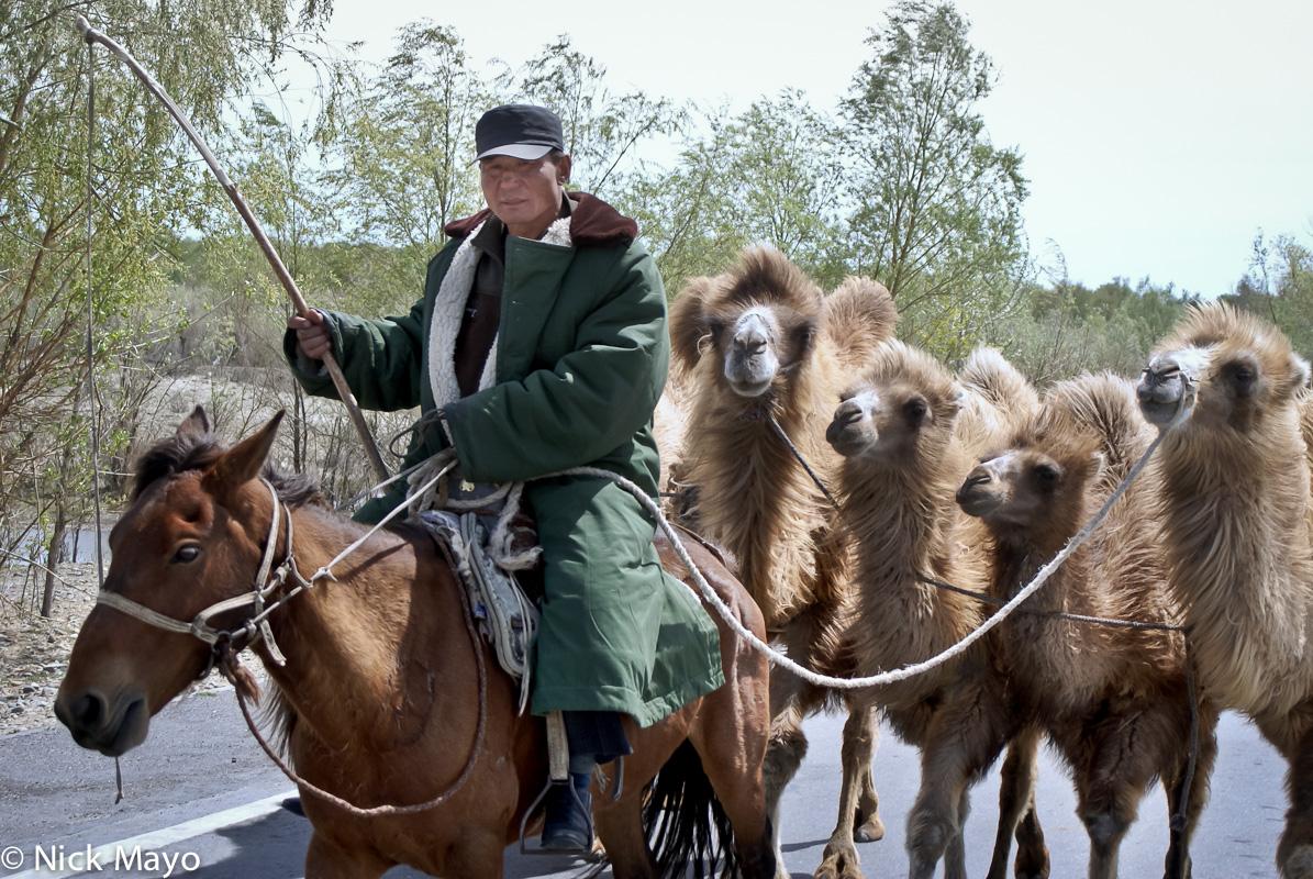 Camel,China,Horse,Kazakh,Xinjiang, photo