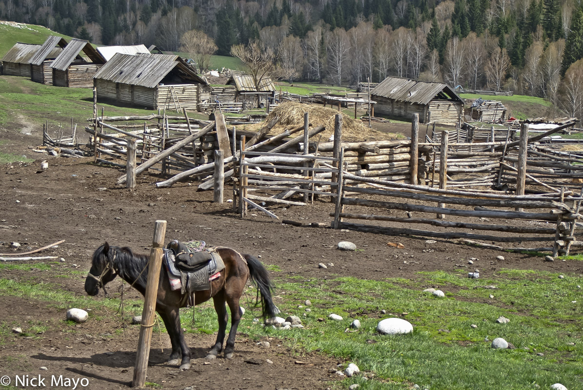 A hitched horse and wooden cabins and animal pens in a settlement near Hemu.