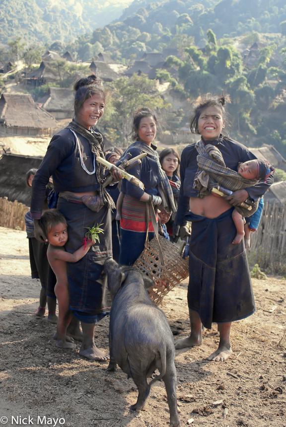 Burma,Eng,Pig,Shan State, photo