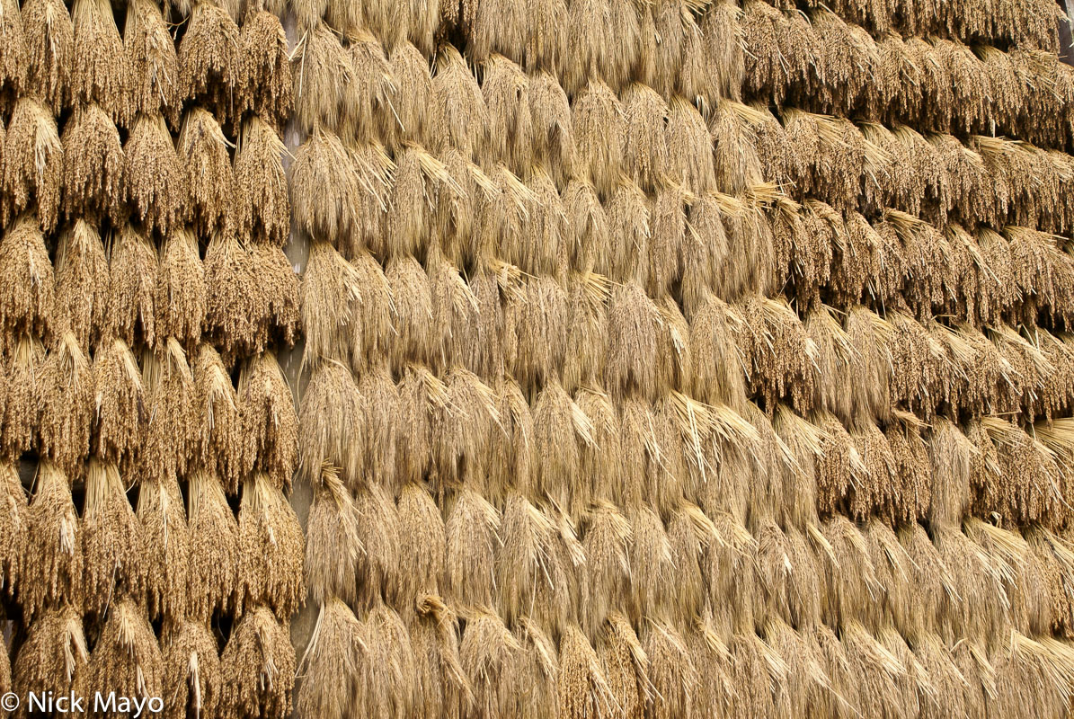 Sheaves of paddy rice drying on racks in the village of Wuei.