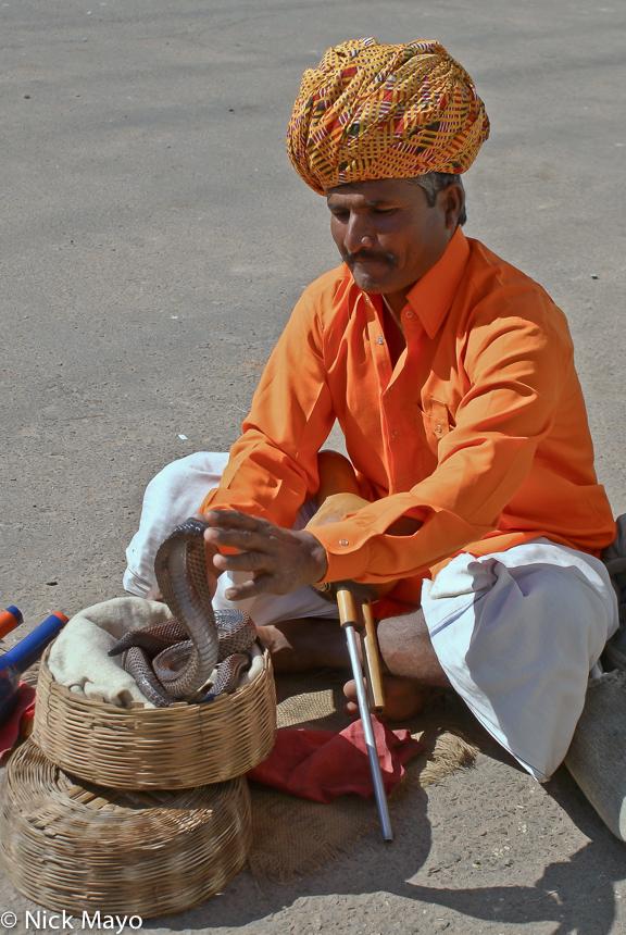 India,Rajasthan,Snake,Turban, photo