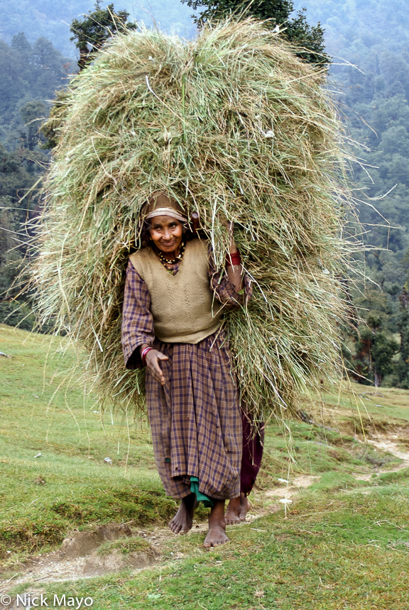 Fodder,India,Strap,Uttarakhand, photo