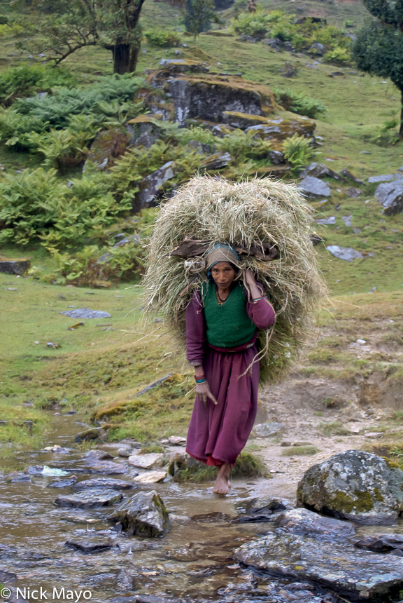 Fodder,India,Strap,Uttarakhand, photo