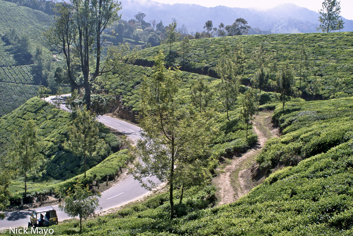 India,Kerala,Tea Field, photo