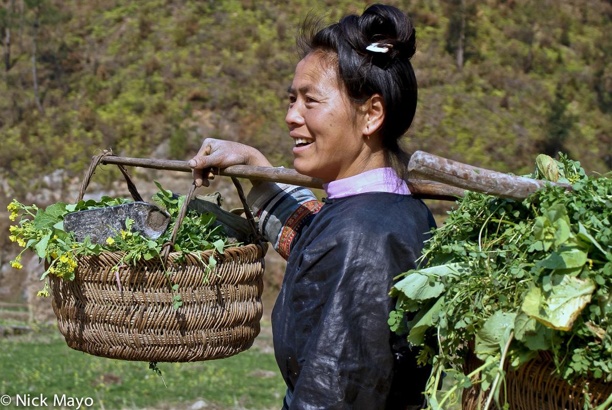 China,Dong,Fodder,Guizhou,Shoulder Pole, photo