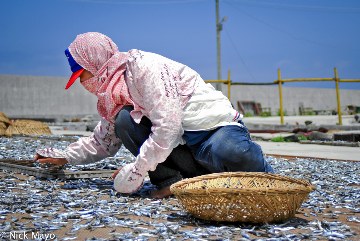 Fish Catch,Penghu,Taiwan, photo