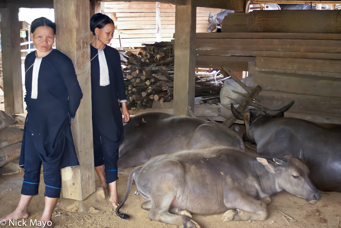 Lai Chau,Vietnam,Water Buffalo,Yao, photo