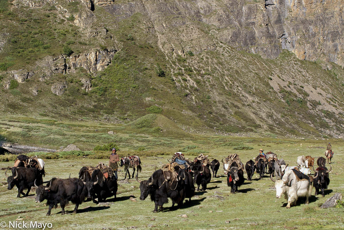 Dolpo,Nepal,Pack Animal,Yak, photo
