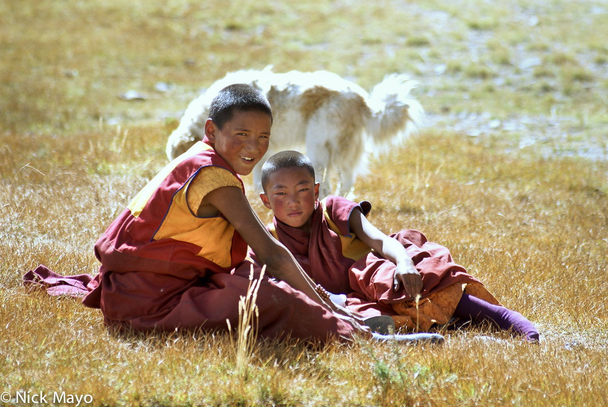 China,Dog,Monk,Sichuan,Tibetan, photo
