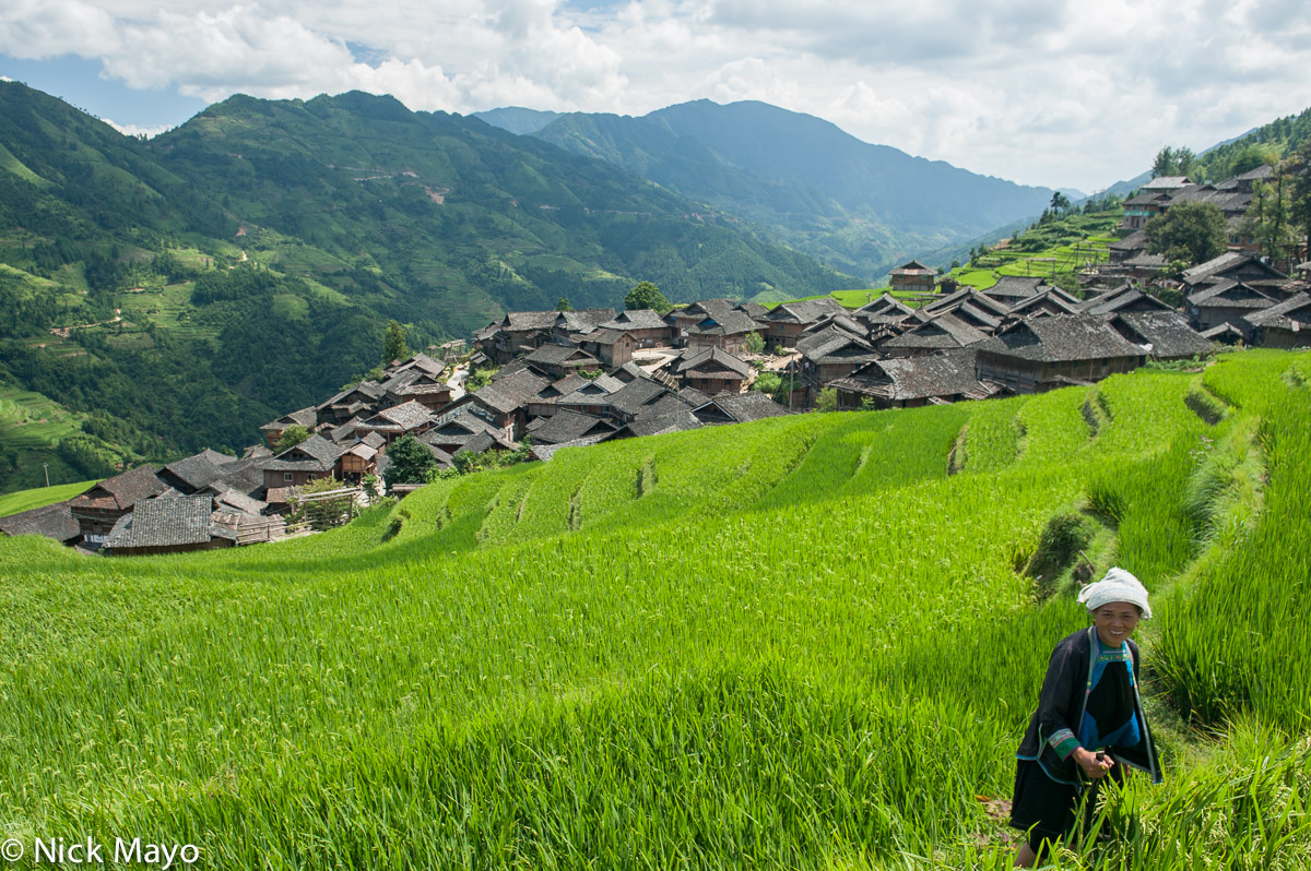 The wooden Miao village of Jia Ci Cun, with its traditionally roofed houses, surrounded by terraces of paddy.