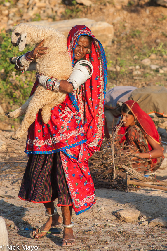 Anklet,Bangle,Bracelet,Gujarat,Head Scarf,Herding,India,Rabari,Sheep, photo