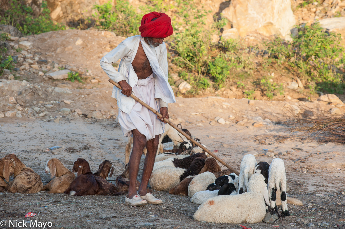 Gujarat,Herding,India,Rabari,Sheep,Turban, photo