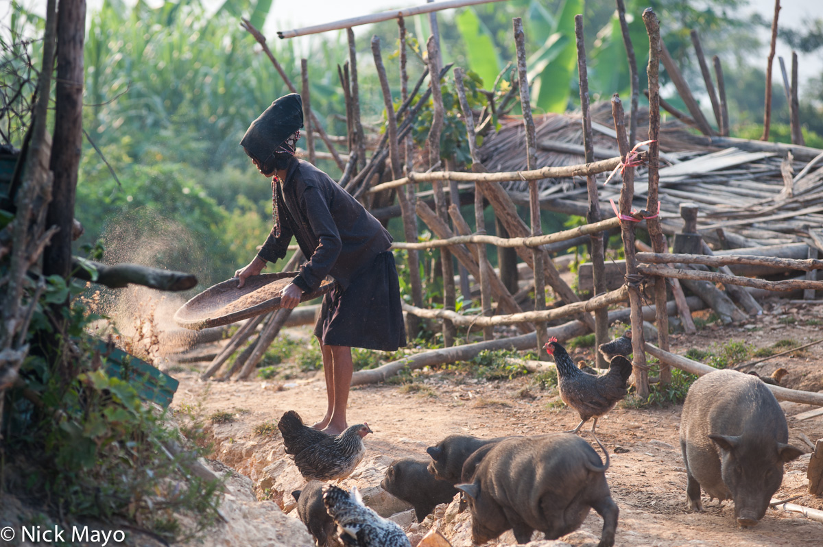 Chicken,Hani,Laos,Paddy,Phongsali,Pig,Winnowing, photo
