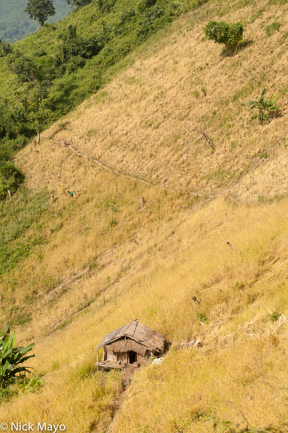 Hut,Laos,Paddy,Phongsali,Thatch, photo