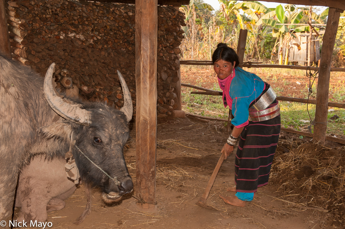 Burma,Mattock,Palaung,Shan State,Water Buffalo, photo