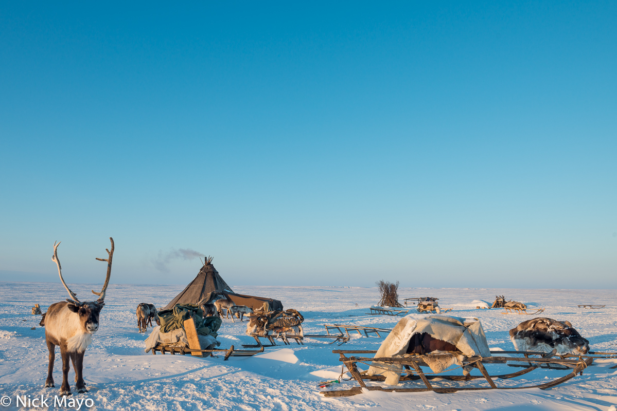 Reindeer,Russia,Sledge,Tent,Yamalo-Nenets, photo