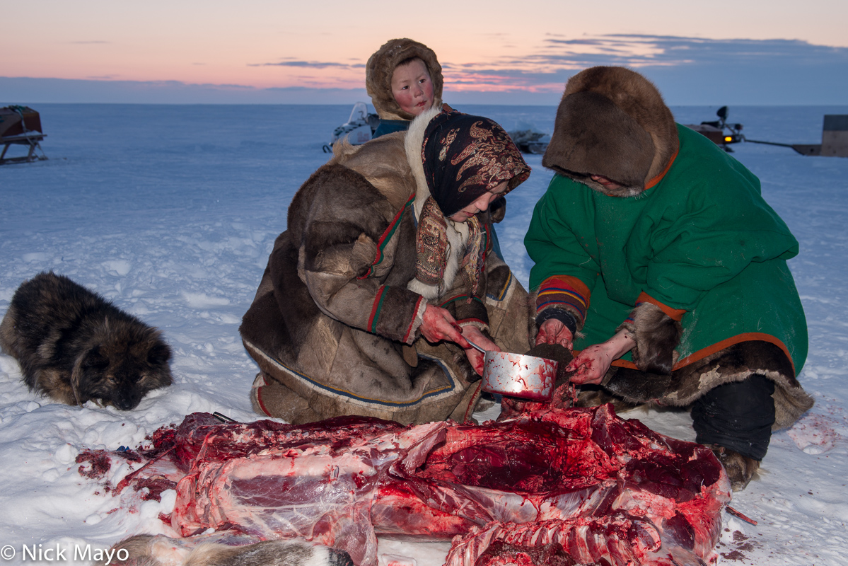 Dog,Meat,Nenets,Russia,Yamalo-Nenets, photo