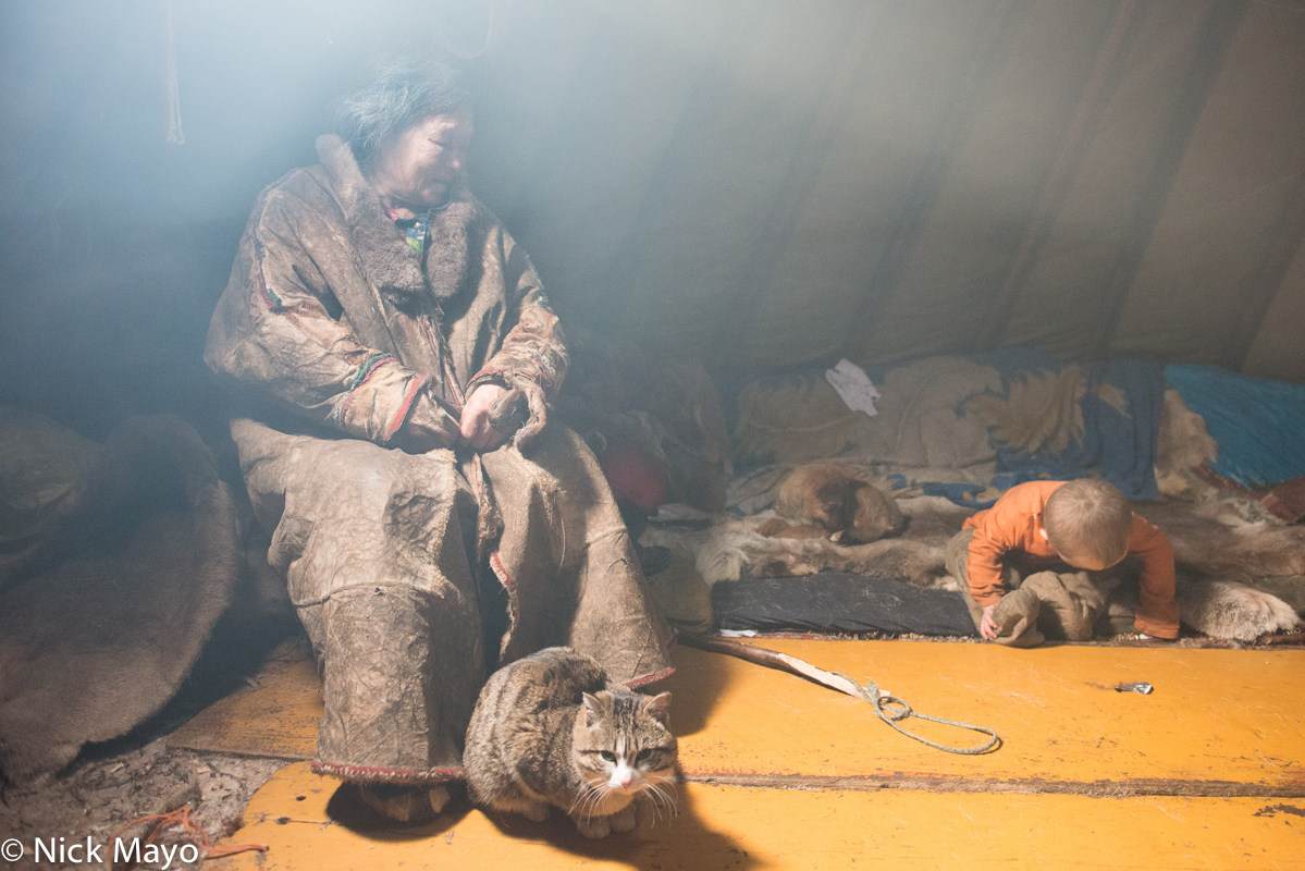 Cat,Nenets,Russia,Yagushka,Yamalo-Nenets, photo