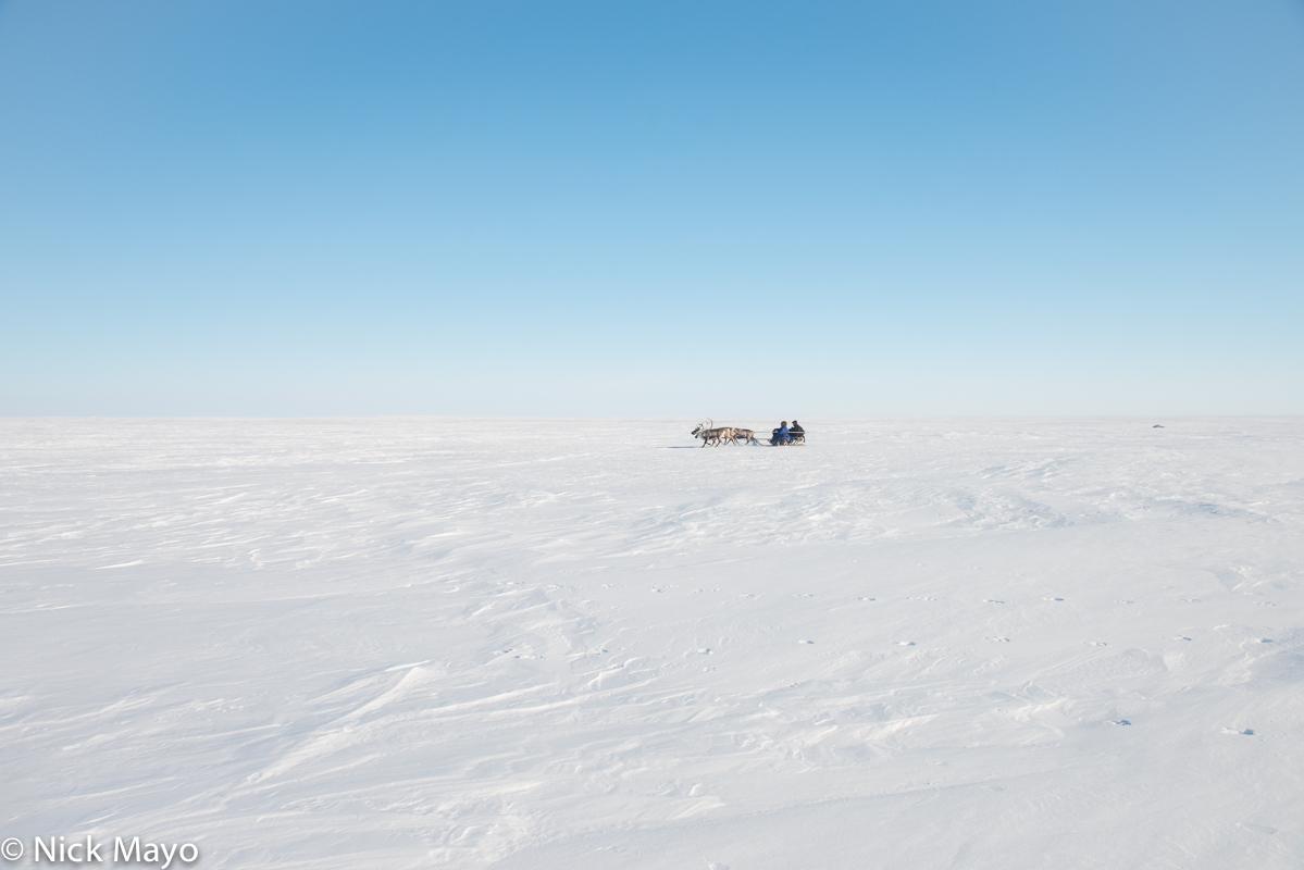 Nenets,Russia,Sledge,Yamalo-Nenets, photo