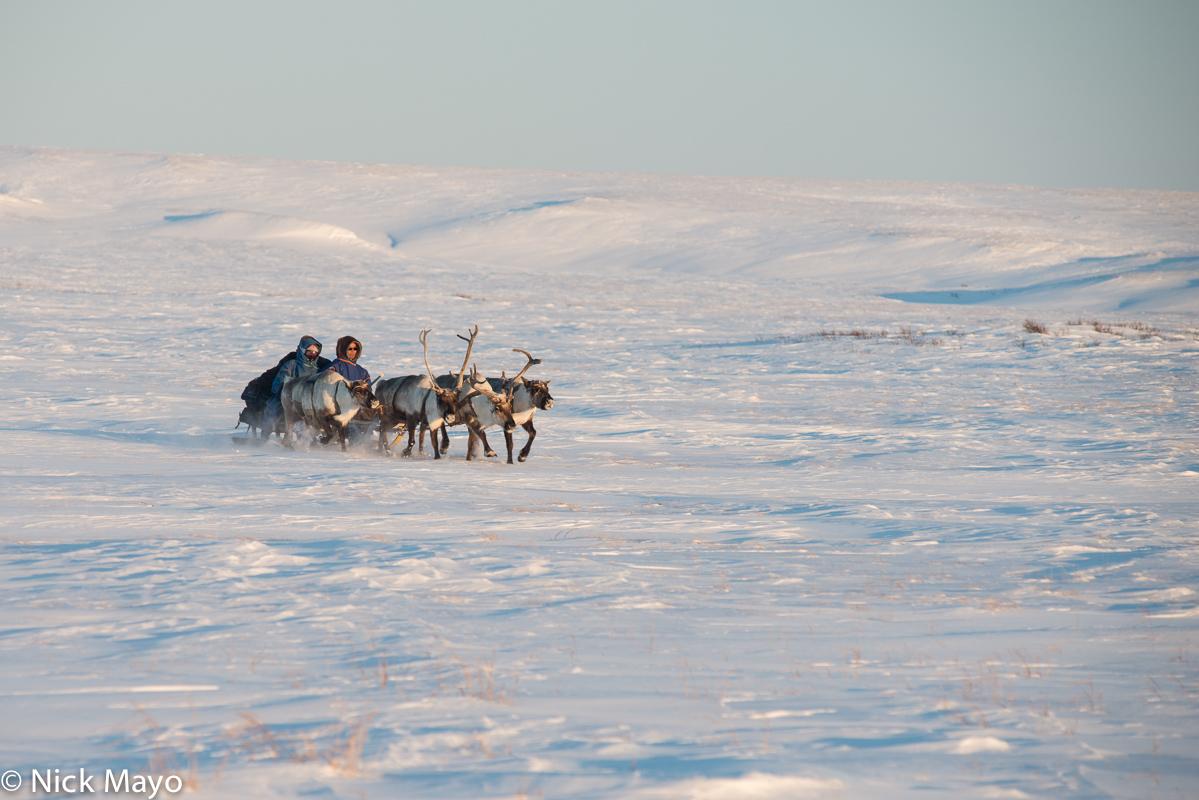 Nenets,Reindeer,Russia,Sledge,Yamalo-Nenets, photo