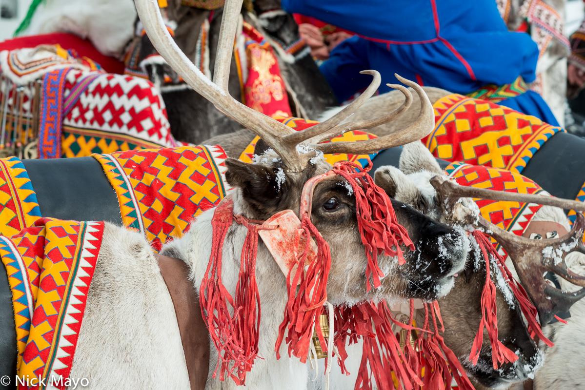 Festival,Reindeer,Russia,Yamalo-Nenets, photo