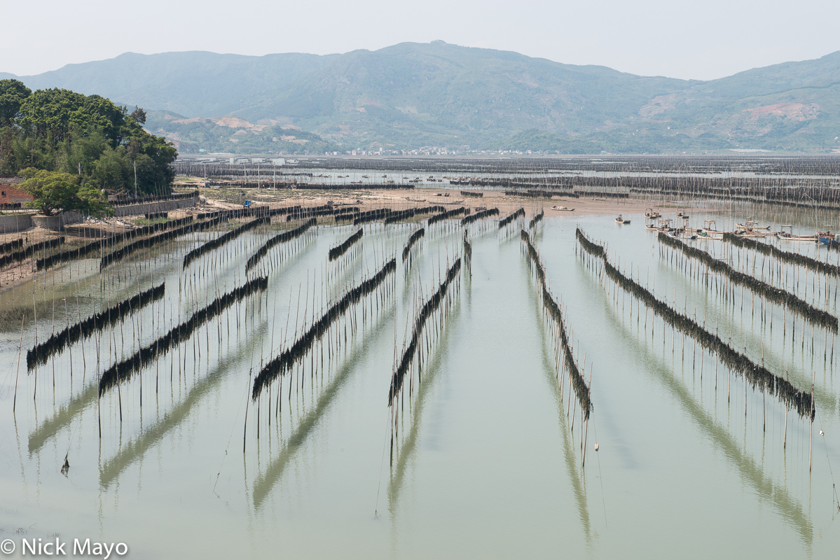China,Drying,Fujian,Kelp, photo