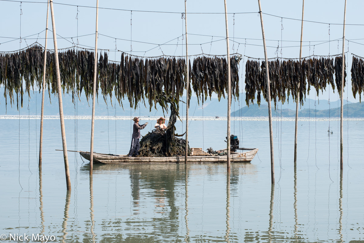 Boat,China,Drying,Fujian,Kelp, photo