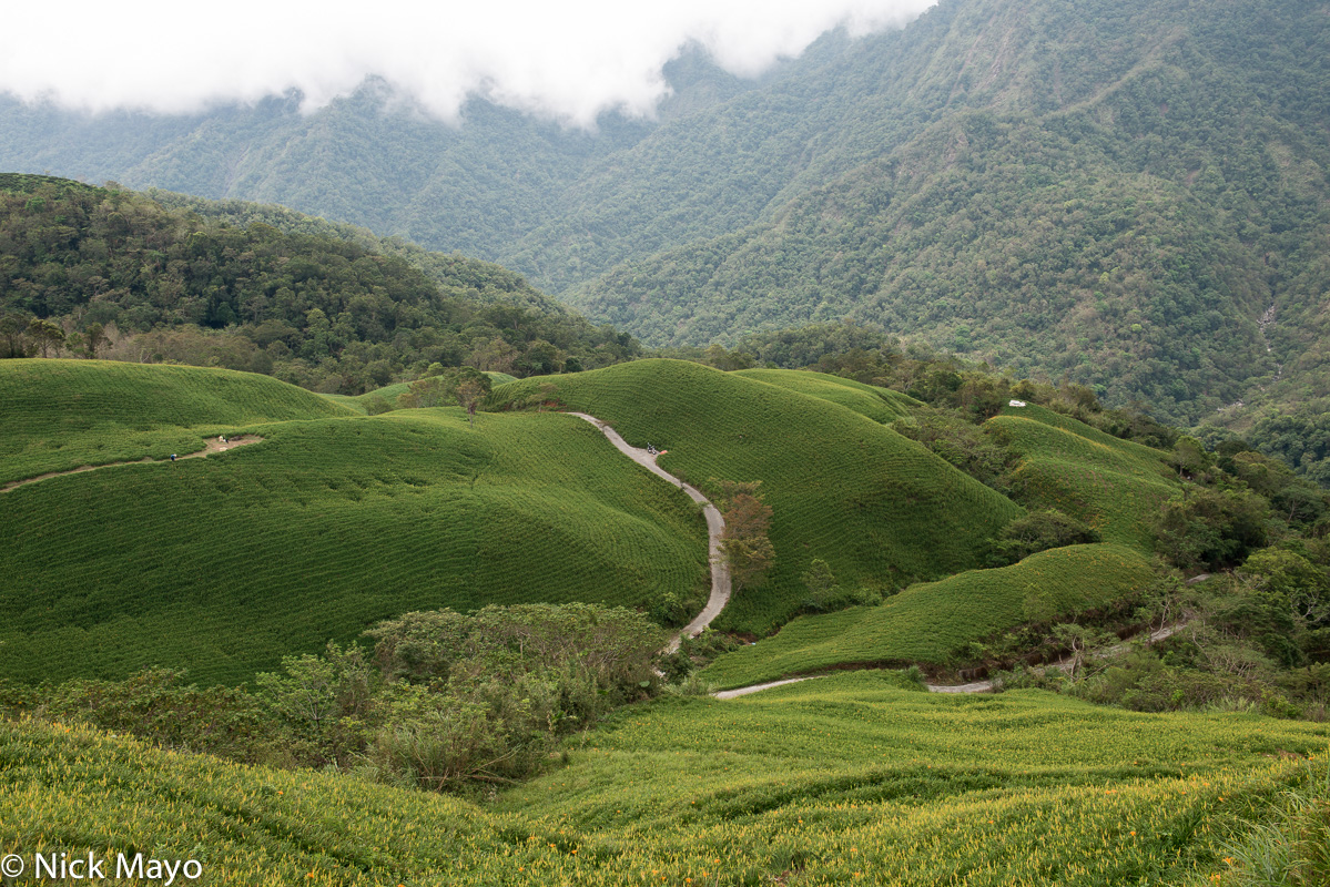 A road through harvested daylily fields at Liushidanshan In Hualien County.