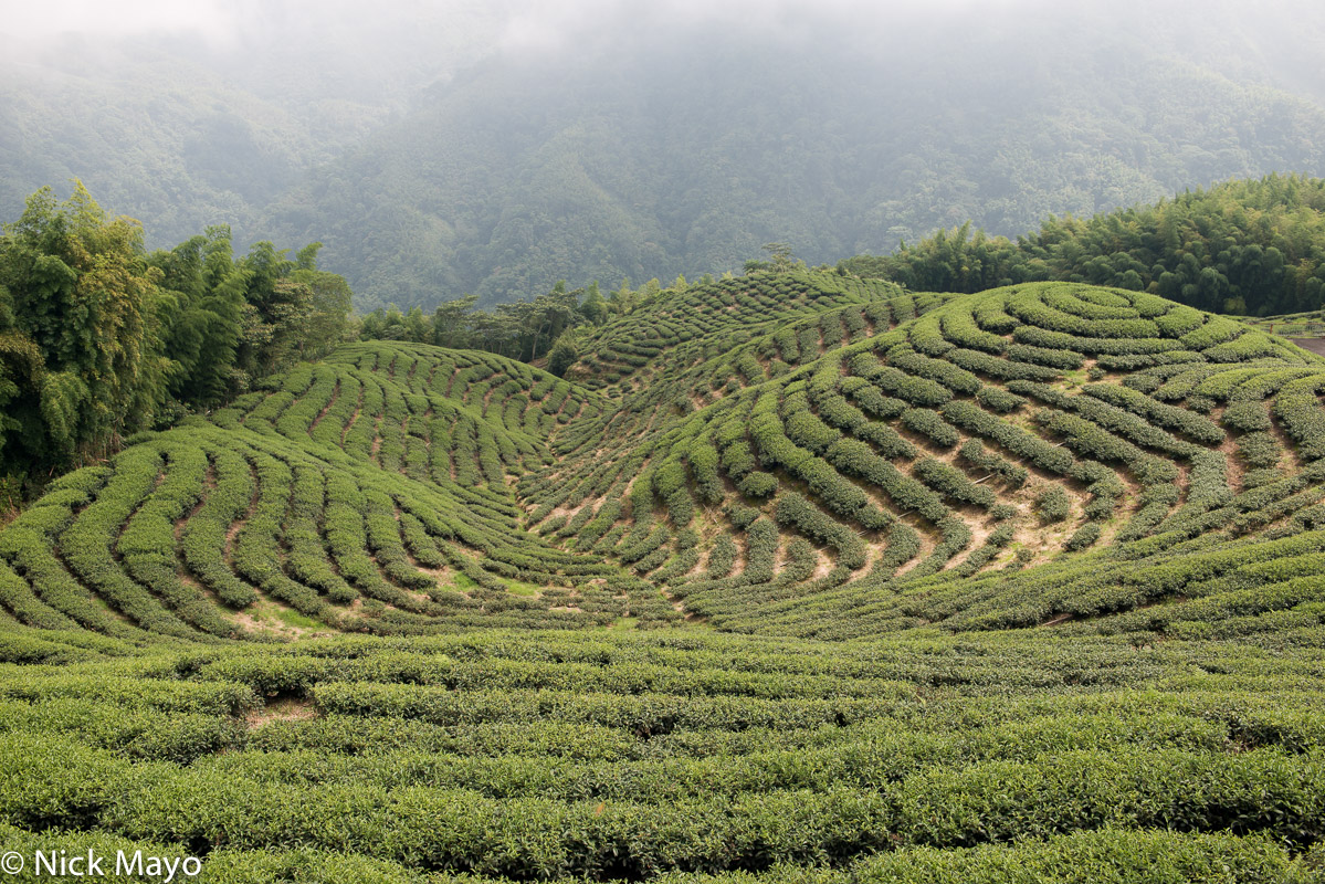 Central Mountains,Taiwan,Tea Field, photo