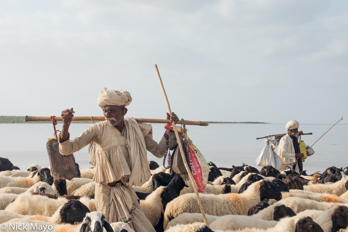 Gujarat,Herding,India,Rabari,Sheep,Shoulder Pole,Turban, photo