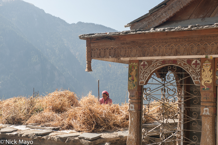 A woman threshing at Roghi in Kinnaur.
