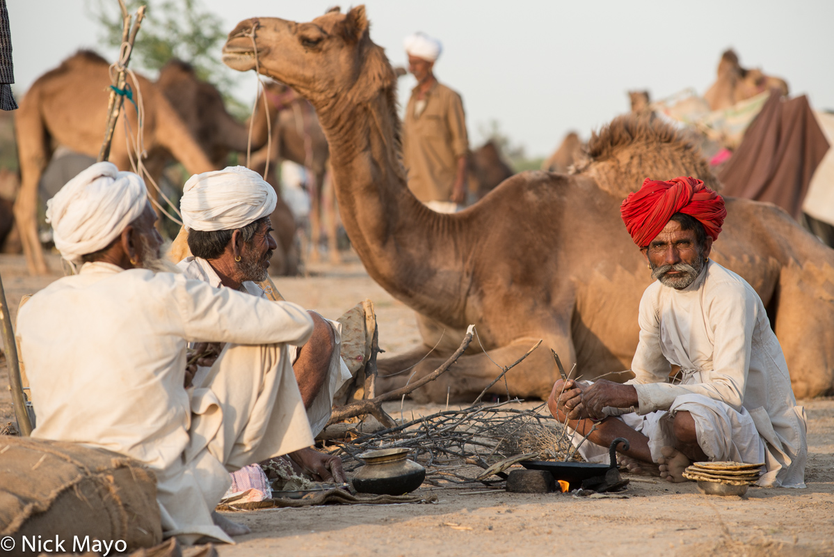 Camel,Chapati,Cooking,Festival,India,Rabari,Rajasthan,Turban, photo