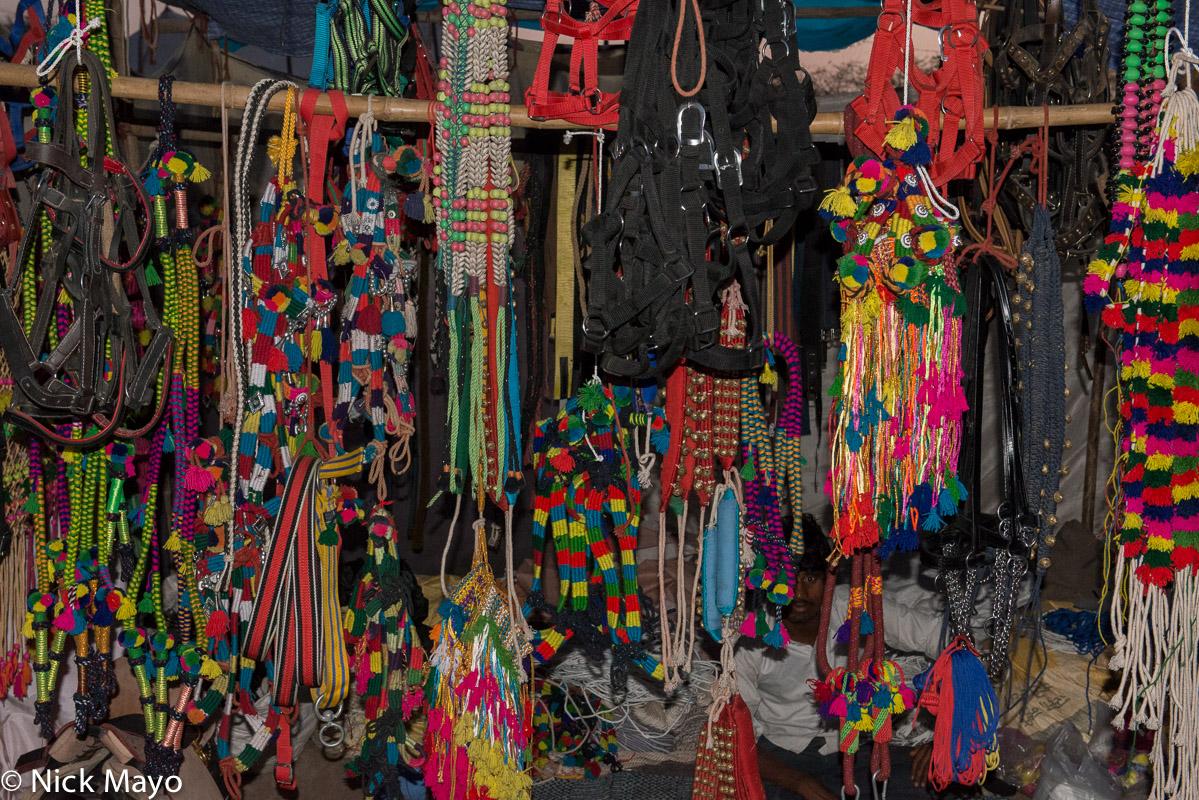 Festival,India,Rajasthan, photo