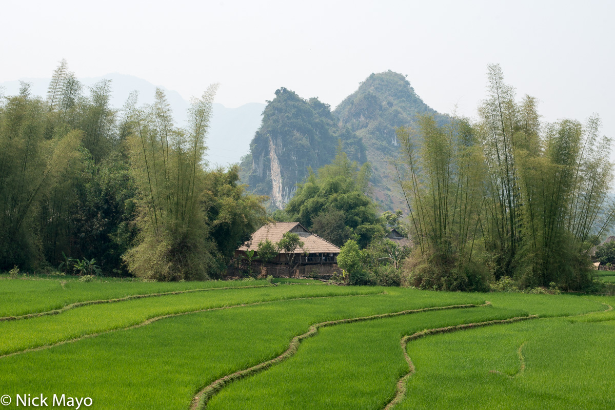 Lai Chau,Paddy,Residence,Vietnam, photo