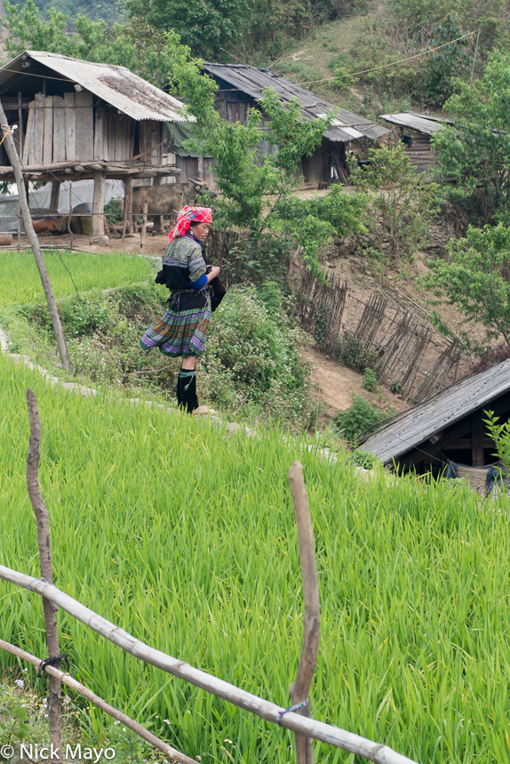 A Hmong woman sewing while standing on a rice field wall near Mu Cang Chai.