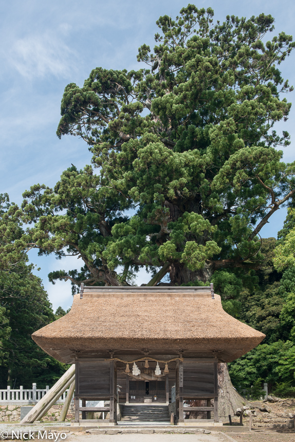 Chugoku,Japan,Roof,Temple,Thatch, photo