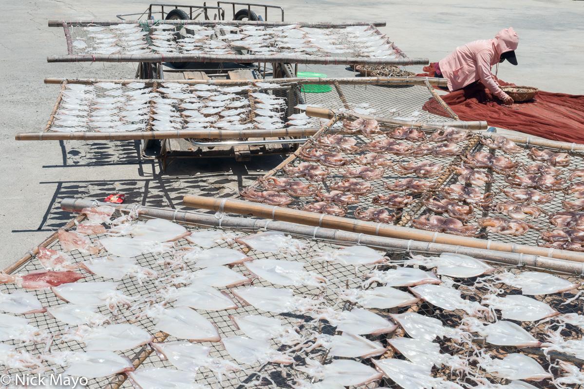 Fish Catch,Penghu,Taiwan, photo
