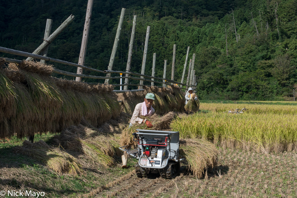 Chugoku,Drying Rack,Harvesting,Japan,Paddy, photo