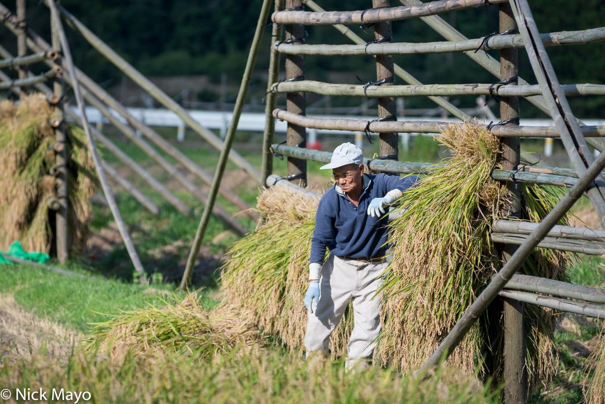 Chugoku,Drying Rack,Japan,Paddy, photo