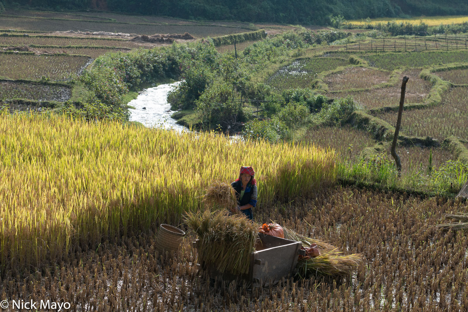 Head Scarf,Miao,Paddy,Threshing,Vietnam,Wicker Basket,Yen Bai, photo
