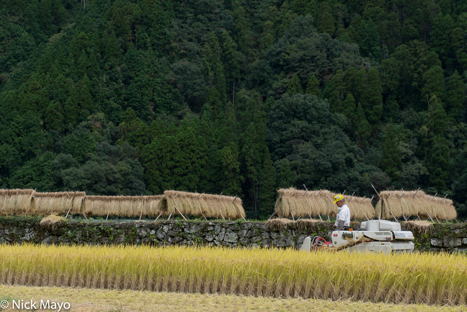 Drying Rack,Harvesting,Japan,Kyushu,Paddy, photo