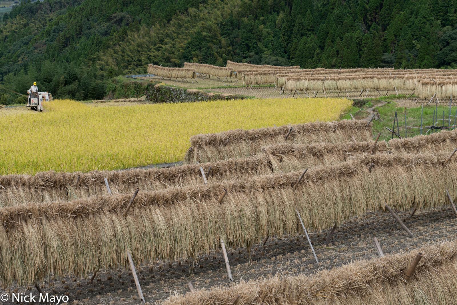 Drying Rack,Harvesting,Japan,Kyushu,Paddy, photo